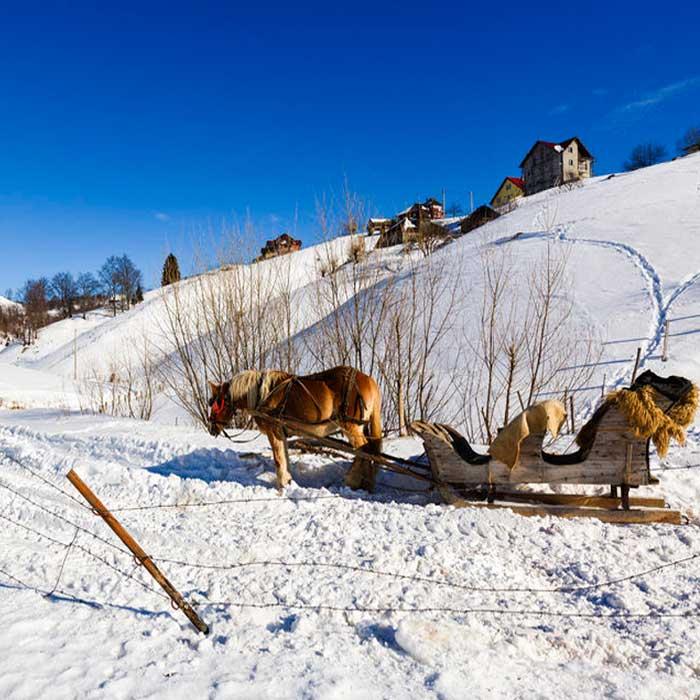 Sightseeing mit Pferd: Geniessen Sie die Winterlandschaft!